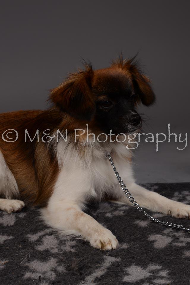 M&N Photography -DSC_2304