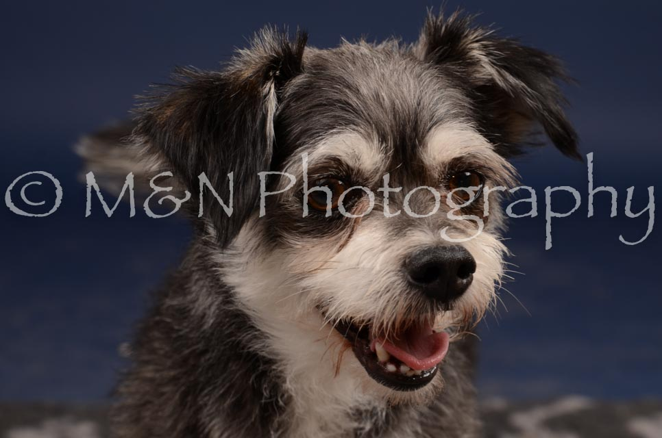 M&N Photography -DSC_0860