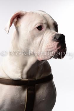 M&N Photography -DSC_8762