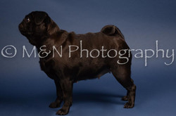 M&N Photography -DSC_3861