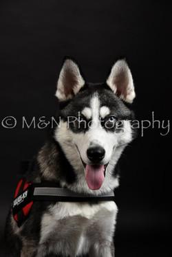 M&N Photography -DSC_2667