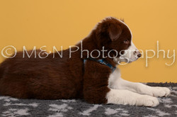 M&N Photography -DSC_4705