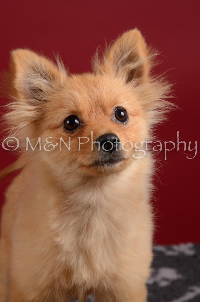 M&N Photography -DSC_3245