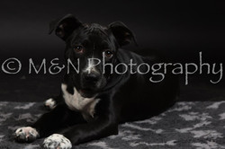 M&N Photography -DSC_2661
