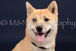 M&N Photography -DSC_0664