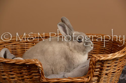 M&N Photography -_SNB0506