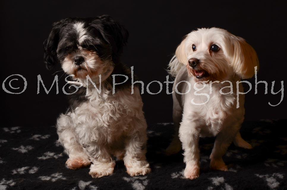 M&N Photography -DSC_5770
