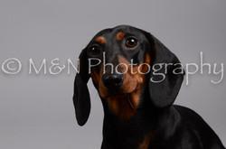 M&N Photography -DSC_2862