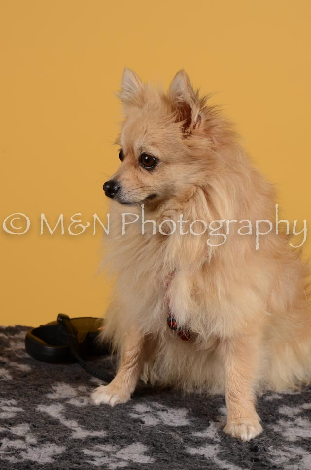 M&N Photography -DSC_4833