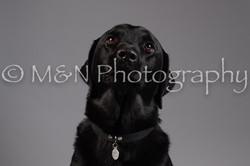 M&N Photography -DSC_1530