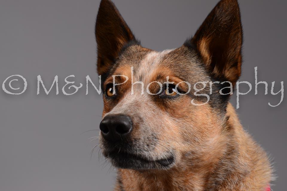 M&N Photography -DSC_1941