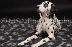 M&N Photography -DSC_9780