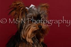M&N Photography -DSC_3332