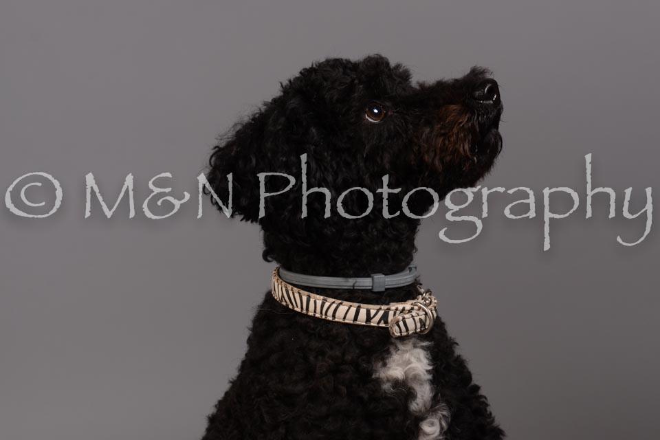 M&N Photography -DSC_2411