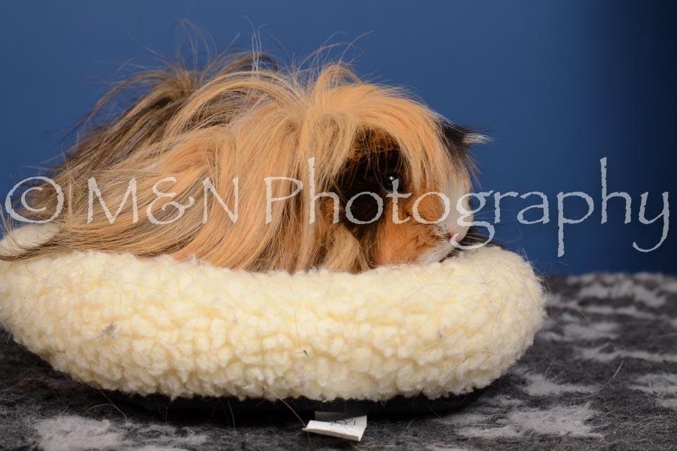 M&N Photography -DSC_5336