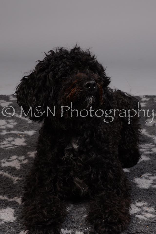 M&N Photography -DSC_2645