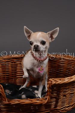 M&N Photography -DSC_2184