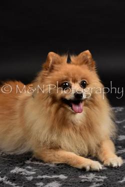 M&N Photography -DSC_2601