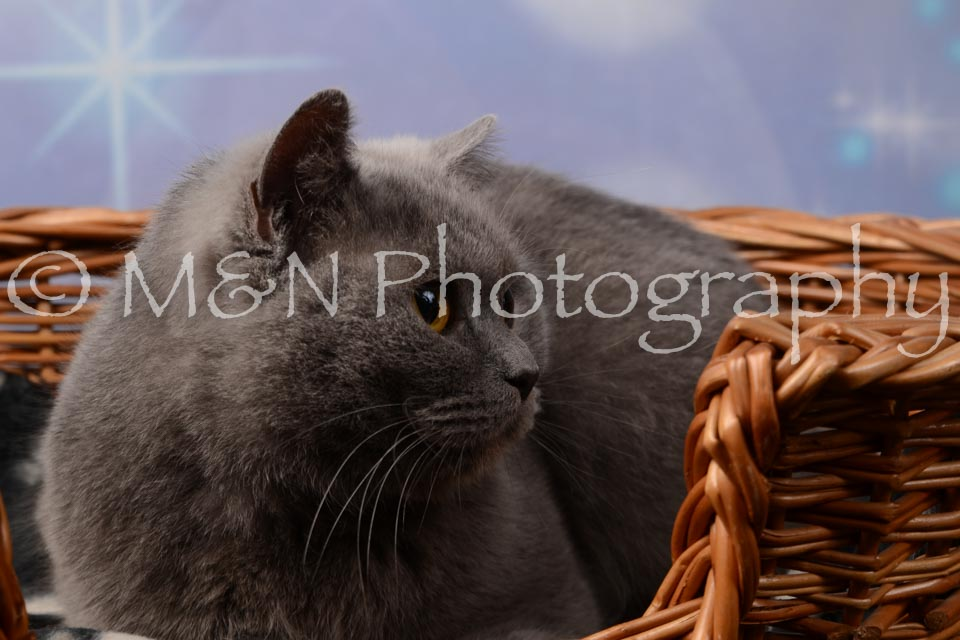M&N Photography -DSC_6973