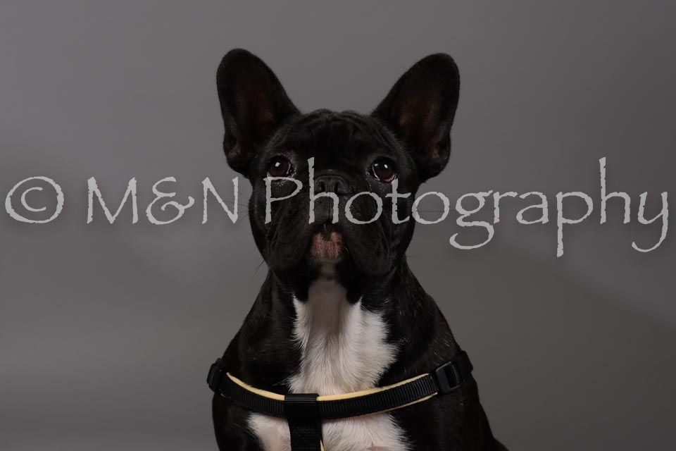 M&N Photography -DSC_1722