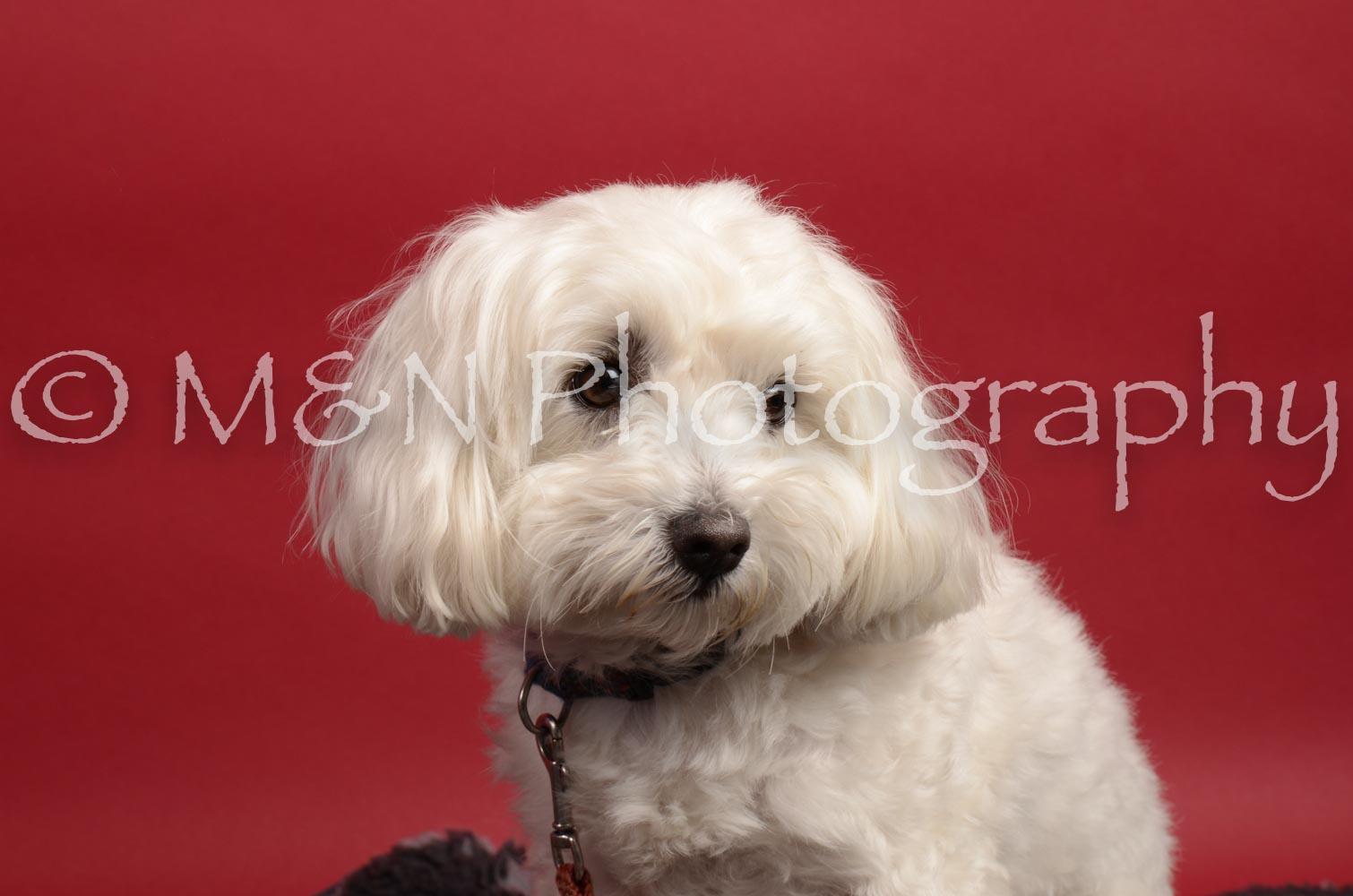 M&N Photography -DSC_8644