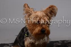 M&N Photography -DSC_2628