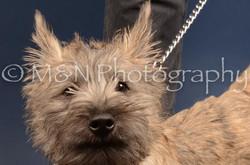 M&N Photography -DSC_4234