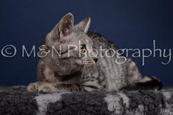 M&N Photography -DSC_4273
