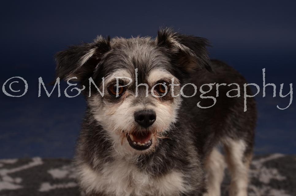 M&N Photography -DSC_0854