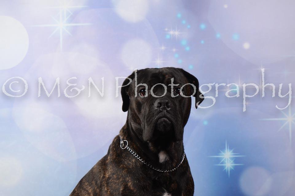 M&N Photography -DSC_6809