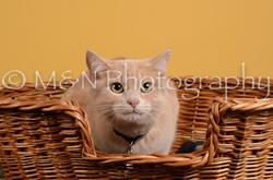 M&N Photography -DSC_4803