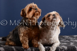 M&N Photography -DSC_4010