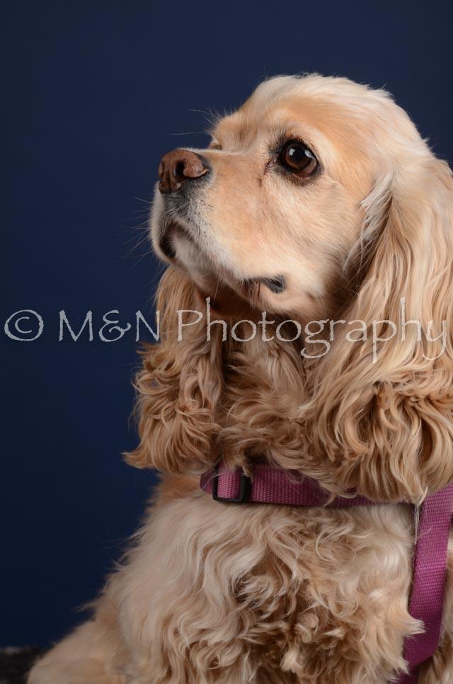 M&N Photography -DSC_4014