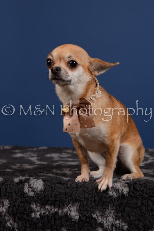 M&N Photography -DSC_5300