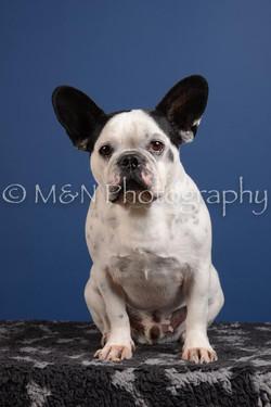 M&N Photography -DSC_5002