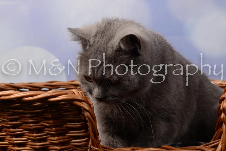 M&N Photography -DSC_6982