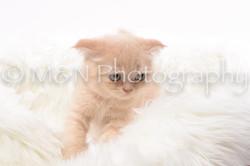 M&N Photography -DSC_8830