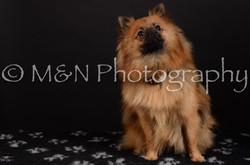 M&N Photography -DSC_5858