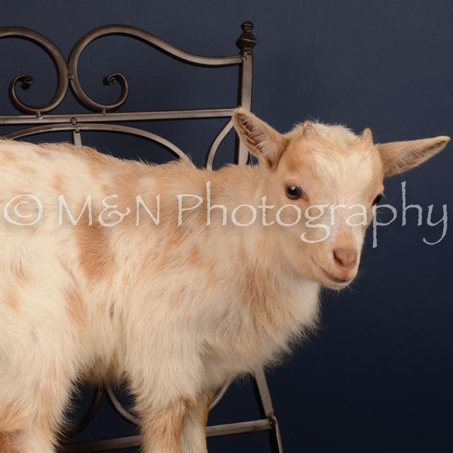 M&N Photography -DSC_4638