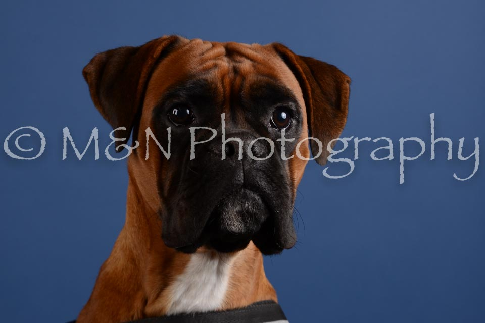M&N Photography -DSC_5248