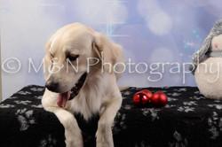 M&N Photography -DSC_6662