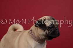 M&N Photography -DSC_3378