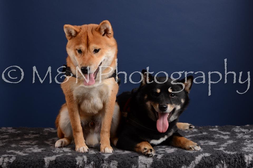 M&N Photography -DSC_4230