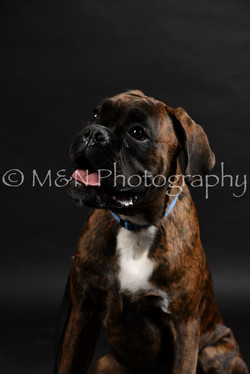 M&N Photography -DSC_2473