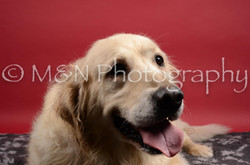 M&N Photography -DSC_8428