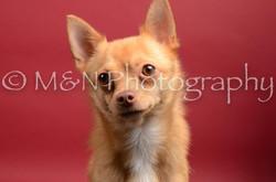 M&N Photography -DSC_8417