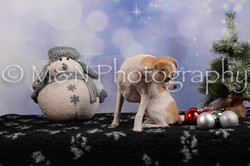 M&N Photography -DSC_6507