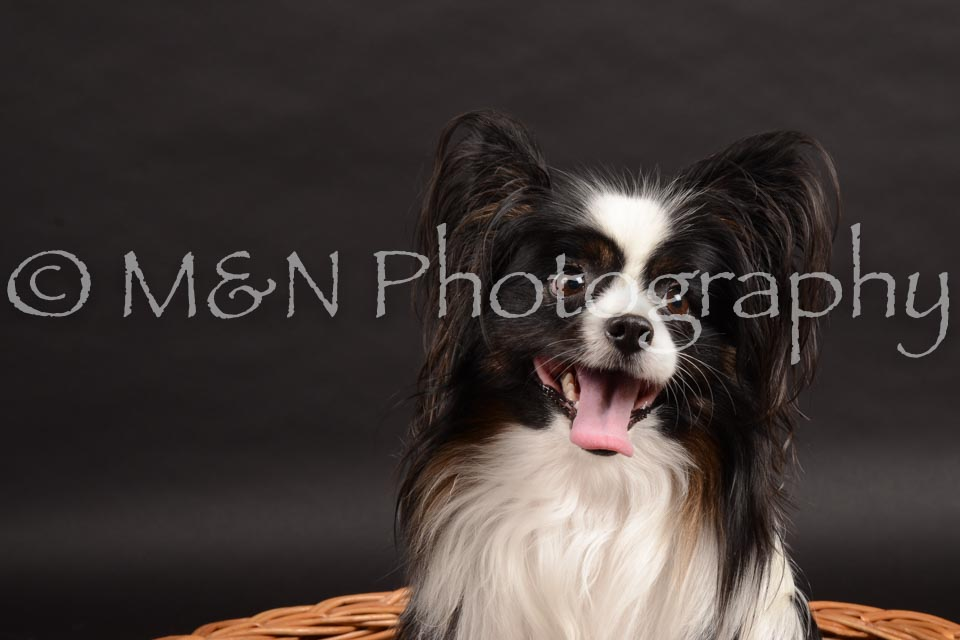 M&N Photography -DSC_9827