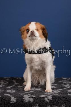 M&N Photography -DSC_5155