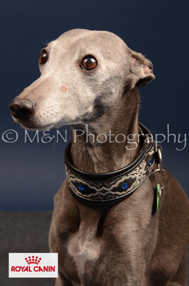 M&N Photography -DSC_4610-2